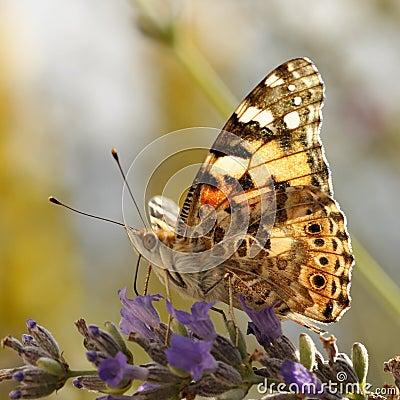 4_butterflies_01
