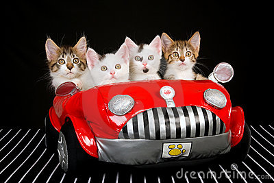 4 Cute kittens in red soft toy car