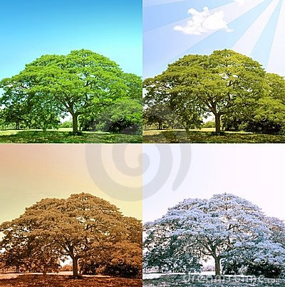 4 estaciones en un árbol