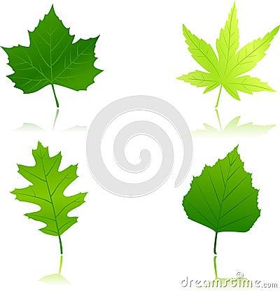 4 green spring leaves