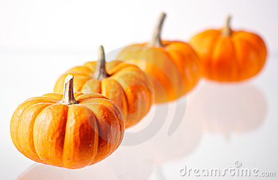 4 Miniature Pumpkins on White