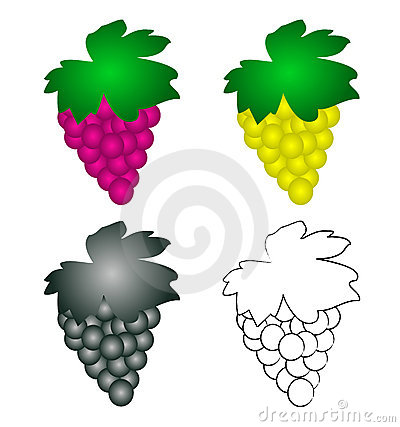 4 wine grapes