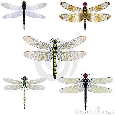 Free 5 Dragonflies Stock Images - 3337124