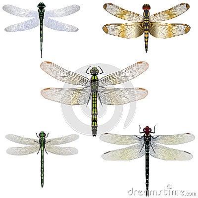5 Dragonflies