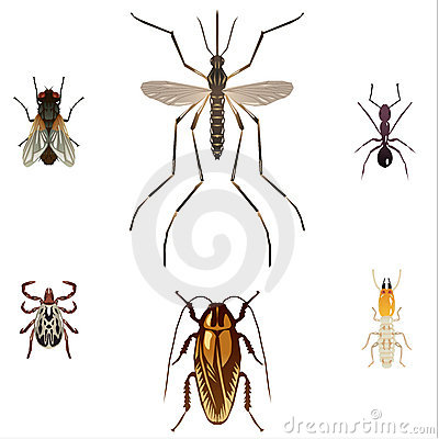 Free 5 Pest Insects Royalty Free Stock Images - 3337129