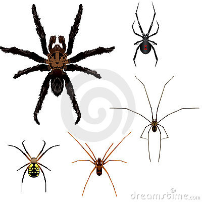 Free 5 Spider Illustrations Stock Photos - 3337133