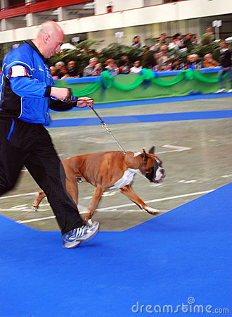 59° International Canine Show Editorial Stock Image