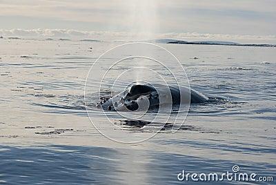 кит океана 6 humpback южный
