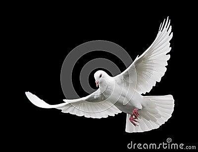 6 lotu białych gołębi