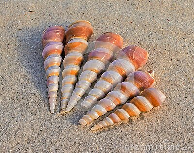 6 White And Brown Seashells On Sand At Daytime Free Public Domain Cc0 Image