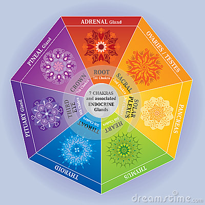 Free 7 Chakras Color Chart With Mandalas And Endocrine Glands Royalty Free Stock Image - 29503126