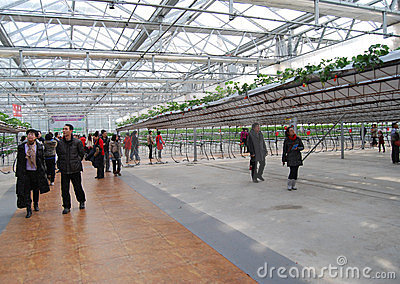 7th international Strawberry  Symposium Editorial Stock Photo