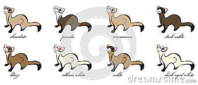 8 Different Ferret Coats