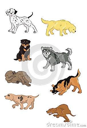 8  puppies