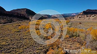 Aérien au-dessus d'un lit de rivière où poussent des arbres au feuillage jaune lors d'une journée ensoleillée d'automne banque de vidéos