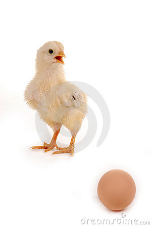 Free A Baby Chick And An Egg Stock Photography - 4987832