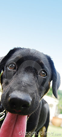 Free A Black Puppy Stock Photography - 6117232
