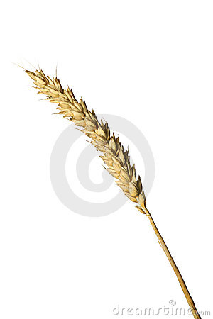 Free A Blade Of Wheat Stock Photos - 3974463