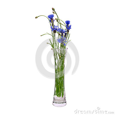 Free A Bouquet Of Blue Spring Flowers In A Glass Transparent Vase Is Isolated On A White Background. Royalty Free Stock Photos - 95152488