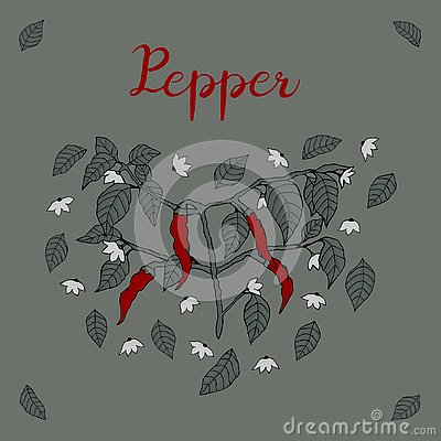 Free A Branch Of Chili Pepper, Painted With Four Red Peppers, Flowers And Leaves With Shadows And The Inscription `Pepper` On A Gray- Royalty Free Stock Images - 126414119