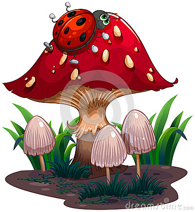 Free A Bug Crawling At The Red Giant Mushroom Stock Photo - 32330790