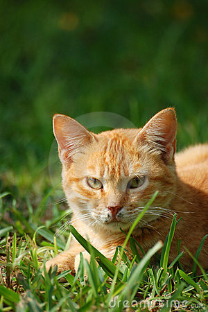Free A Cat In The Field. Royalty Free Stock Images - 2212519