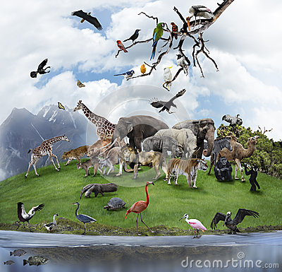 Free A Collage Of Wild Animals And Birds Stock Photography - 33582272