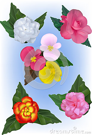 Free A Collection Of Begonia Flower Vector Illustrations Stock Photos - 42779963
