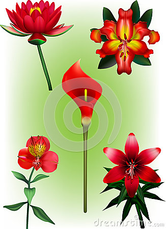 Free A Collection Of Red Lily Vector Illustrations Royalty Free Stock Image - 42738026