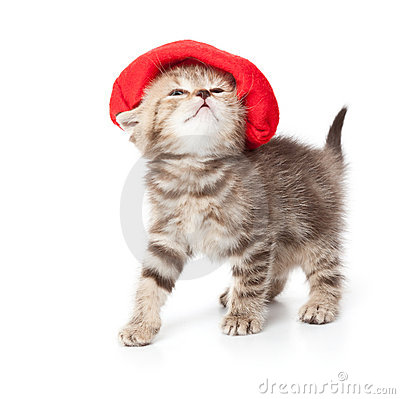 Free A Cute Kitten In A Red Hat Royalty Free Stock Image - 18457926