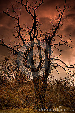 Free A Dead Tree In Hell Stock Image - 13250031