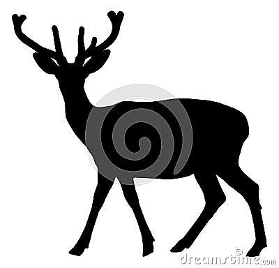 Free A Deer Walking Royalty Free Stock Photo - 35945105