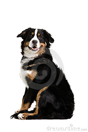 Free A Dog Sitting Up Stock Photos - 4712463