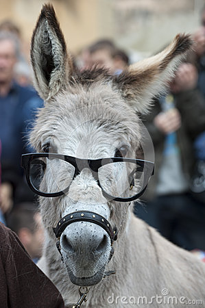 Free A Donkey With Glasses Stock Photography - 35565032