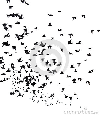 Free A Flock Of Migratory Birds. Royalty Free Stock Photos - 51172718