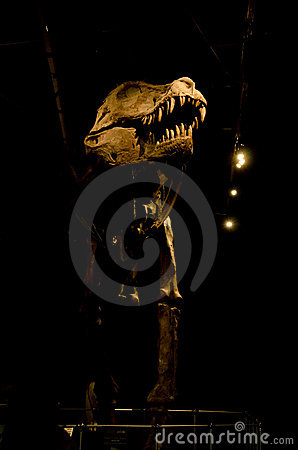 Free A Fossil At Dinos Alive In Malaysia Royalty Free Stock Photo - 19821365
