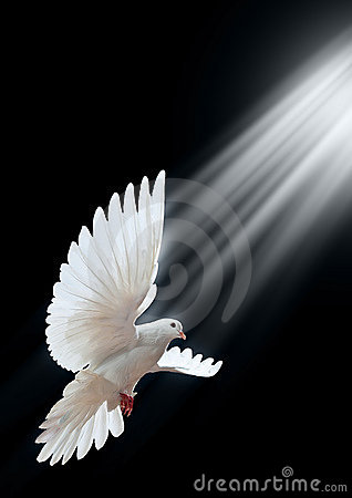 Free A Free Flying White Dove Isolated On A Black Royalty Free Stock Images - 11708239