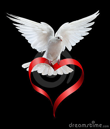 Free A Free Flying White Dove Isolated On A Black Stock Images - 13017994