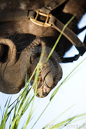 Free A Horse Eating Grass Stock Photo - 9859410