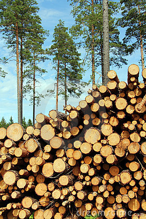 Free A Large Stack Of Wood With Pine Trees Background Stock Photo - 19987010