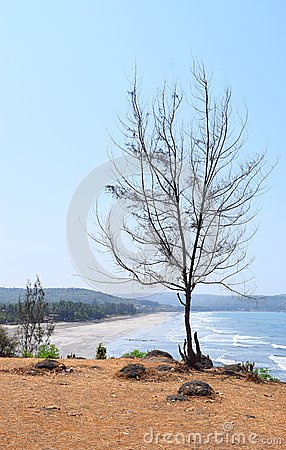 Free A Leafless Bare Tree Against Blue Sky With Background Of Beach Stock Images - 92933234