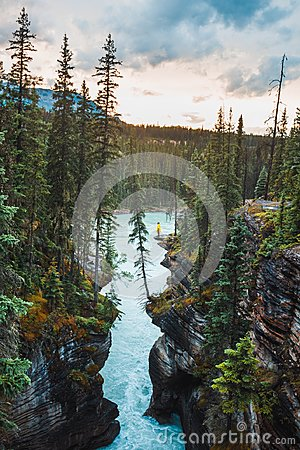 Free A Ledge Overlooking Athabasca River Near Athabasca Falls Royalty Free Stock Images - 111215709