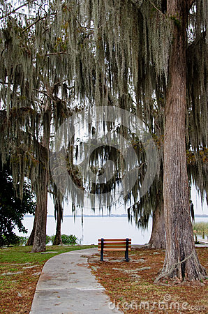 Free A Lone Bench Under Hanging Spanish Moss And Live Oaks Stock Photo - 36709570