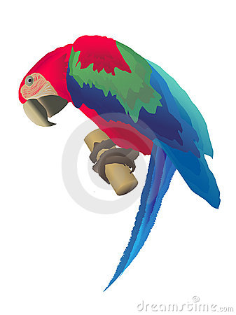 Free A Macaw Parrot Stock Photography - 8849042
