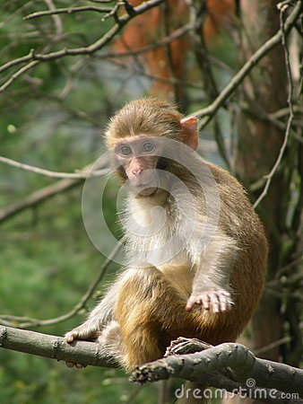 Free A Monkey Royalty Free Stock Photography - 38787657