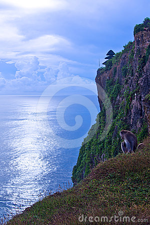 Free A Monkey On The Cliff Stock Image - 24216351