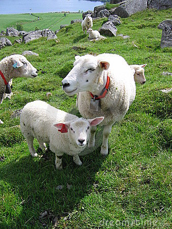Free A Mother Sheep And A Lamb Stock Image - 157861