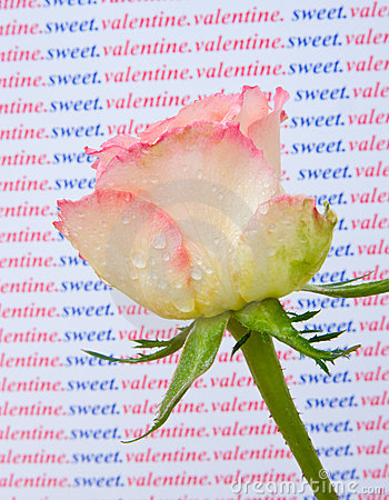 Free A Rose For My Sweet Valentine. Royalty Free Stock Image - 12668476
