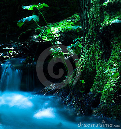 Free A Running Creek Stock Photo - 934750