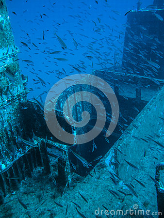 Free A School Of Fish On A Wreck Royalty Free Stock Photography - 81651197